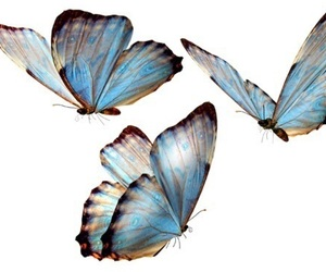 butterfly, overlay, and blue image