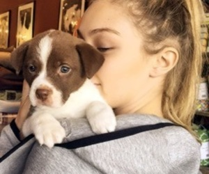 gigi hadid, model, and puppy image