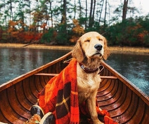 adventure, animal, and nature image