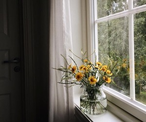 flowers, nature, and window image