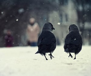 black, cold, and crow image