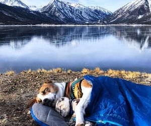 dog, nature, and adventure image