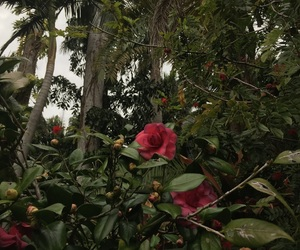 aesthetic, garden, and botanical image