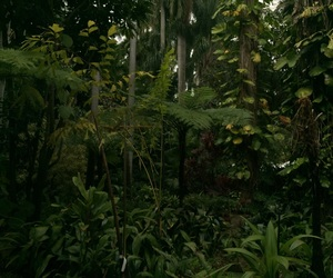 aesthetic, forest, and garden image