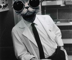 cat, cool, and scientist image