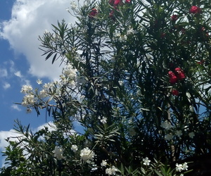 background, cielo, and flores image