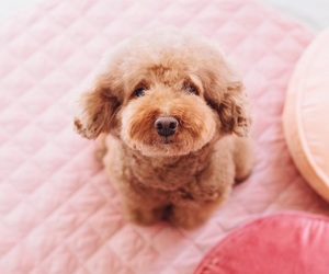 pink and puppy image