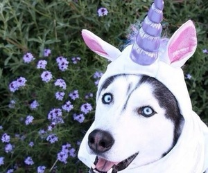 dog, unicorn, and animal image
