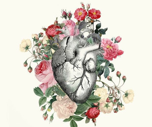 anatomy, heart, and wallpaper image