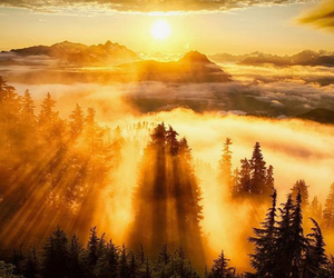 fog, forest, and morning image