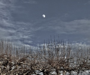 beautiful, moon, and sky image