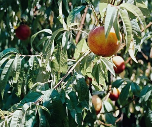 nature, peach, and call me by your name image