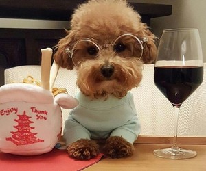 puppy, love, and tea image