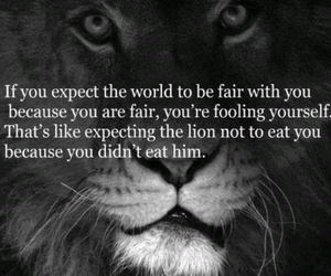 lion, quotes, and fair image