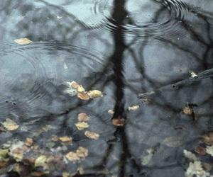 rain, autumn, and photography image