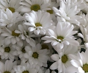 background, daisy, and dasies image