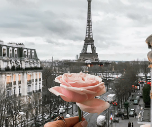 flowers, foto, and paris image