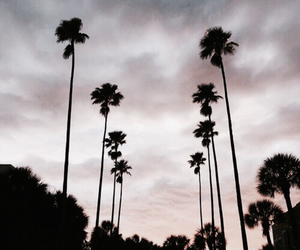 summer, beautiful, and palm trees image