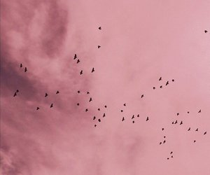 pink, sky, and bird image