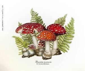 drawing, mushroom, and nature image