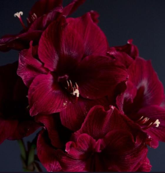 theme, red, and dark image