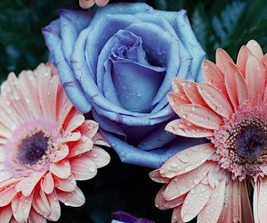 flowers, background, and beautiful image