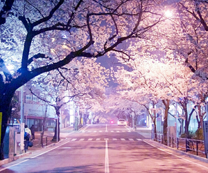 street, japan, and night image