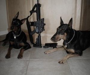 dog, gun, and doberman image