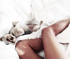 dog, animal, and bed image