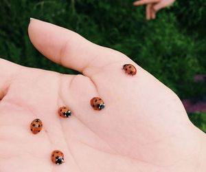 animals, ladybugs, and small image