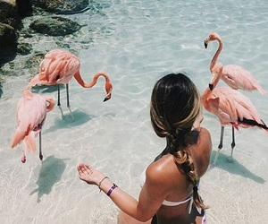 beach, flamingoes, and blue image
