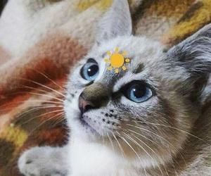 alternative, blue eyes, and eyes image
