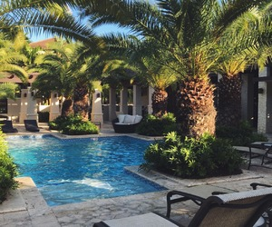 summer, pool, and palms image