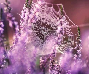 pink, spider, and web image