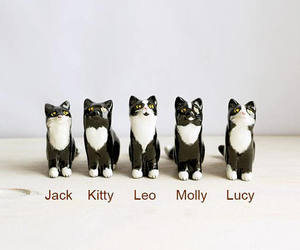 black and white, kittens, and kitty image