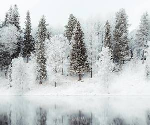 winter, forest, and snow image