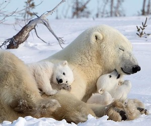 arctic, baby, and cute image