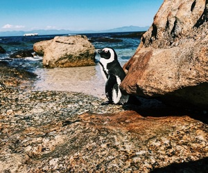 beach, cape town, and penguin image