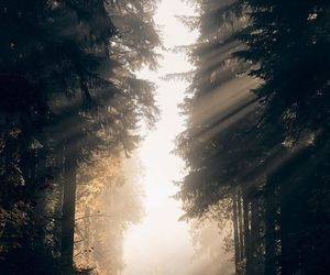 forest, hipster, and photograpy image
