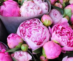 beautiful, carnations, and flowers image
