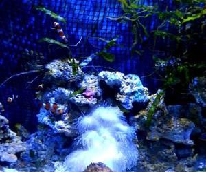 amazing, aquarium, and fish image