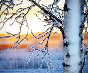 branches, cold, and nature image