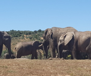 elephants, southafrica, and holiday image