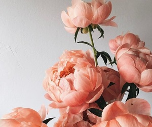 flowers, pink, and peach image