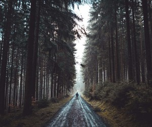 johannes hulsch and forrest walk. image