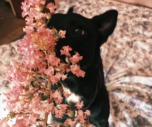 dog, flower, and love image