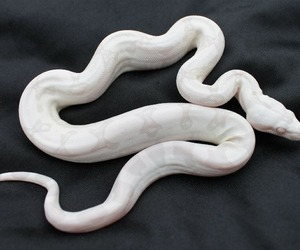 pale and snake image