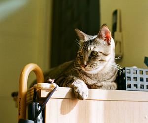 animals, cat, and film image