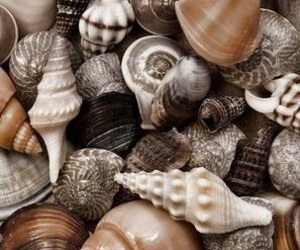 shell and beach image