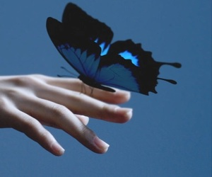 blue, butterfly, and kpop image